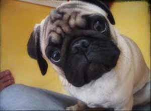 โรคพิษสุนัขบ้า น่ากลัวและต้องระวัง