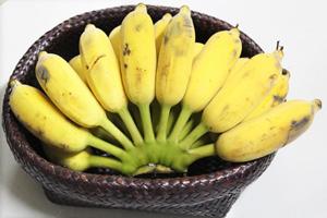 สมุนไพรรักษาโรค กล้วย รักษาโรคกระเพาะ
