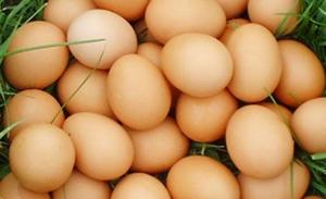 ไข่ไก่ อาหารเพื่อสุขภาพมีแหล่งโปรตีนสูง