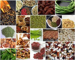 ถั่ว อาหารเพื่อสุขภาพกับสารอาหารที่มากมาย
